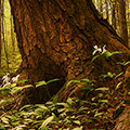 Trees Ontario – Media Planning