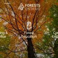 Forests Ontario – Grant Funded Google Campaign