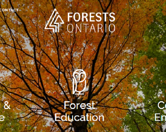 Grant Funded Google Campaign – Forests Ontario